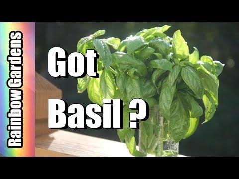 Got Basil Ways To Store Your Basil Lets Freeze It Make Vinegar