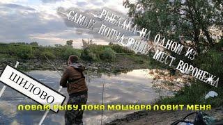 РЫБАЛКА В ОДНОМ ИЗ САМЫМ ПОПУЛЯРНЫХ МЕСТ ШИЛОВО рыбалка на реке Воронеж рыбалка 2020