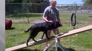 Southside SPCA Field of Dreams: Never Give Up