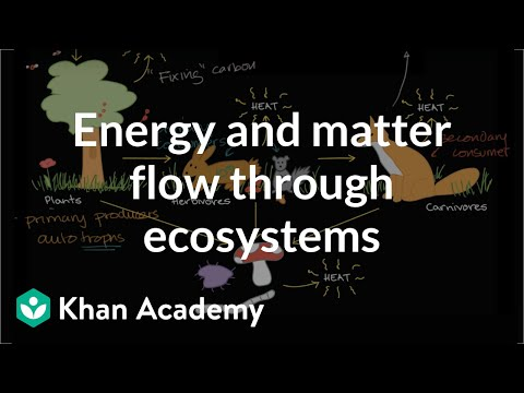 Flow of energy and matter through ecosystem  | Ecology | Khan Academy