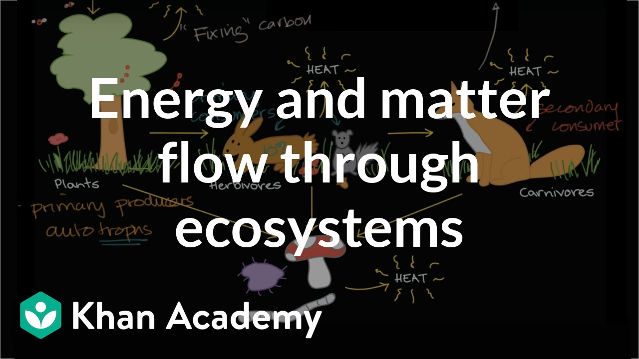 Flow of energy and matter through ecosystems (video) | Khan ...