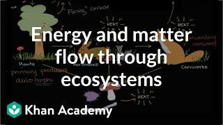 Flow of energy and matter through ecosystem  | Ecology | Khan Academy thumbnail