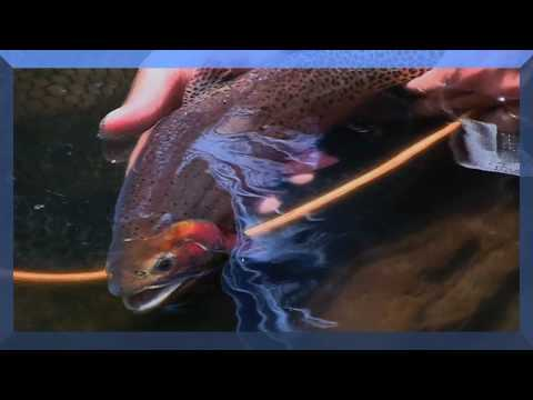 Fly Fishing Colorado The Flat Tops  Part 1