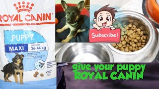 Best Dog Food for German Shepherds | Royal Canin | Dogs Lover