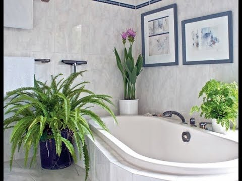 Plants in the bathroom ideas