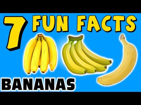 7 FUN FACTS ABOUT BANANAS! FACTS FOR KIDS! Banana! Fruit! Yellow! Learning Colors! Funny Sock Puppet