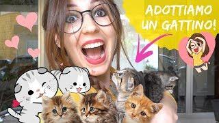 ADOTTIAMO UN GATTINO!  *cuccioli cercano casa!*🏡🐱