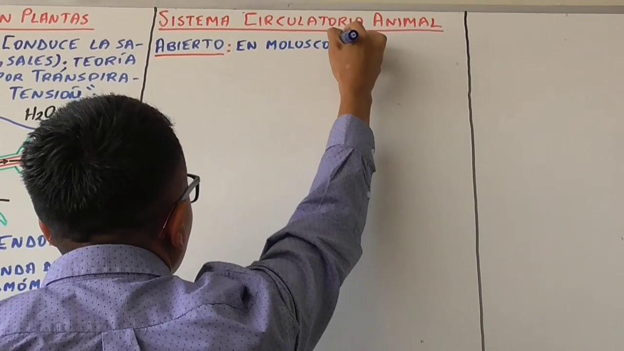 Biología 7 Sistema Circulatorio y Sistema Excretor - Pedro Pedrozo
