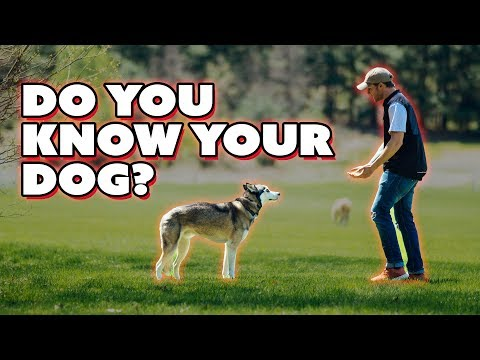 Does my dog respect me? - Balanced Dog Training with Americas Canine Educator
