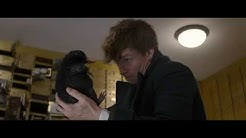 Niffler Funny Scenes in Full HD - Fantastic Beasts And Where To Find Them