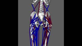 OpenSim simulation of adult walking for 10 gait cycles
