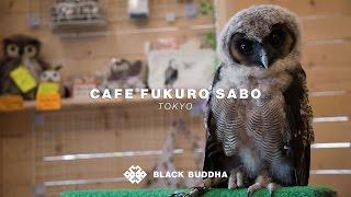 Café Fukuro Sabo (Owl Cafe) | Black Buddha (Tokyo)