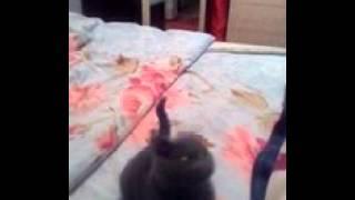 Как из кошки сделать собаку