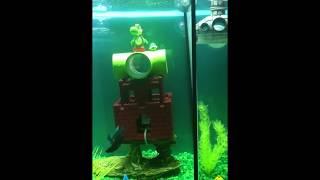 Betta Fish Tank Divided (mario them)