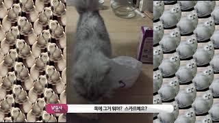 고양이 목에 봉지가 걸렸어요!!! 봉지냥이 나타났다!!…