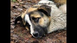Фильм про бездомных собак