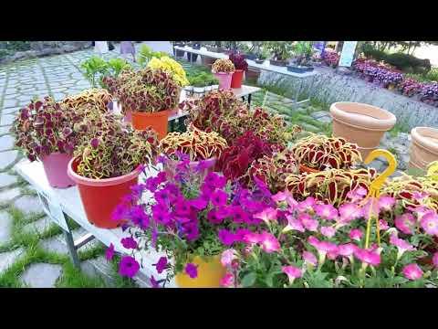 화수목 정원은 이 영상 하나로 천안 커플데이트 여행명소