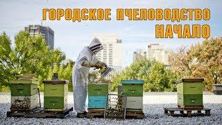 Смотреть видео Пчёлы в Москве. Как я решил поставить улей на балконе. онлайн