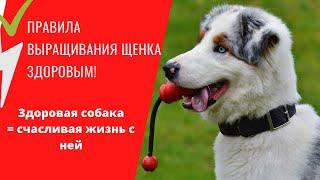 Правила выращивания здорового щенка Уход за щенком правила содержания