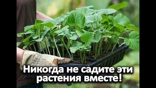 Никогда не садите эти растения вместе!