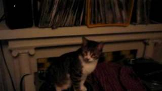 Funny Cat Spinning on Turntables!