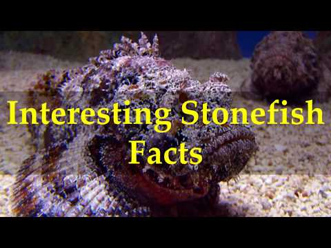 Interesting Stonefish Facts