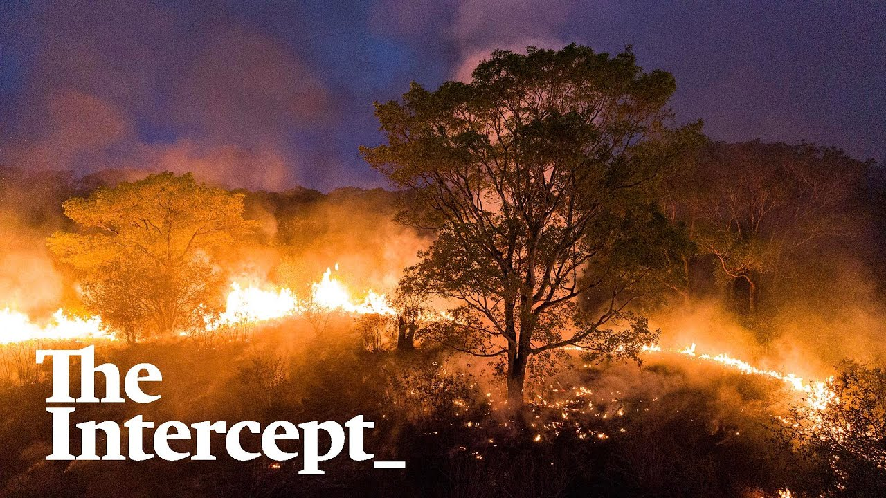 Fires Turn Brazil's Tropical Wetlands Into Wildlife Death Traps