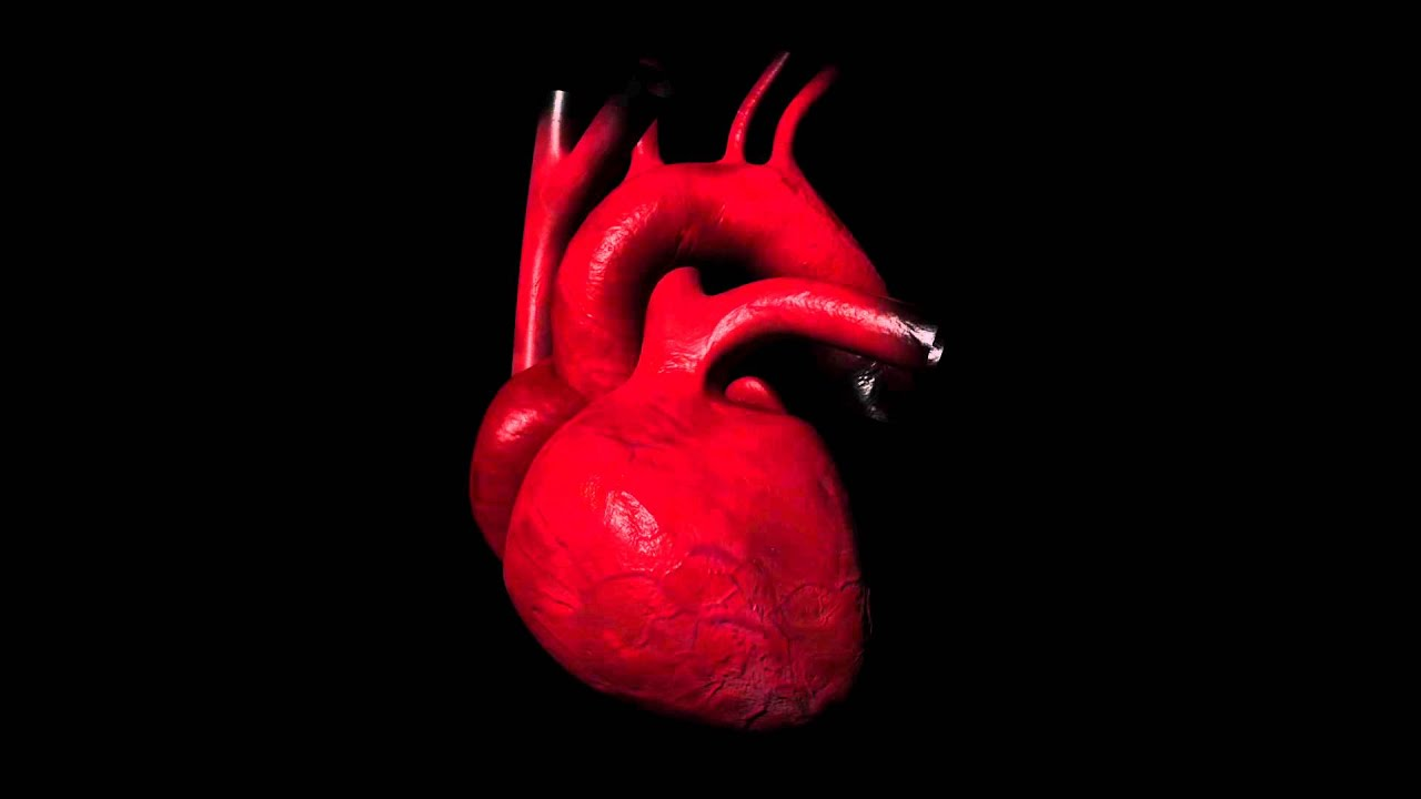 real human heart beating - photo #23