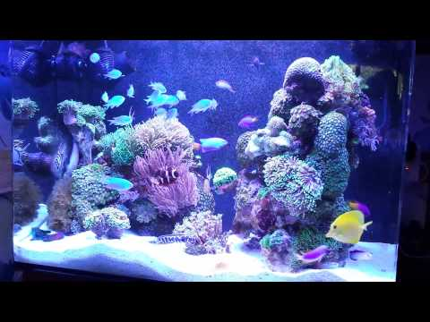 Night view of my 100 liter nano marine tank