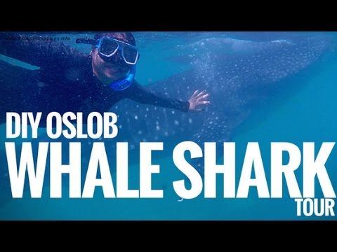 (How to go to) DIY Swimming with the Whale Sharks in Oslob Cebu Tour - G Vlogs #45
