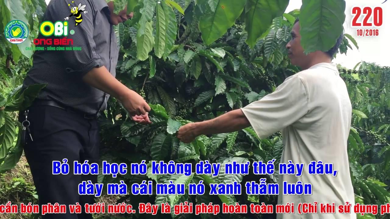 Phân bón Ong Biển - Kỹ thuật chăm sóc cây cà phê kinh doanh [220]