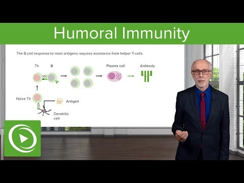 T-Dependent, T-Independent Antigens and Class Switching: Humoral Immunity – Immunology | Lecturio