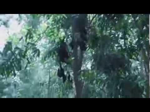 Australia extreme heat kills thousand of bats