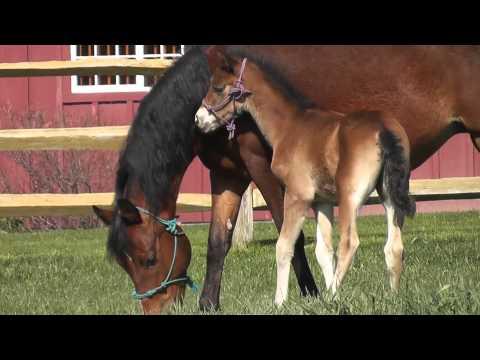 лошадь и жеребёнок (2)