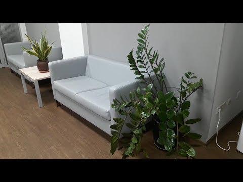 Вопрос: Какие комнатные цветы являются тенелюбивыми?
