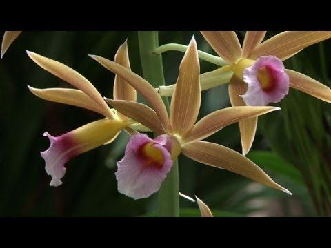 L\'orchidée au coeur du Jardin des Plantes à Paris - YouTube