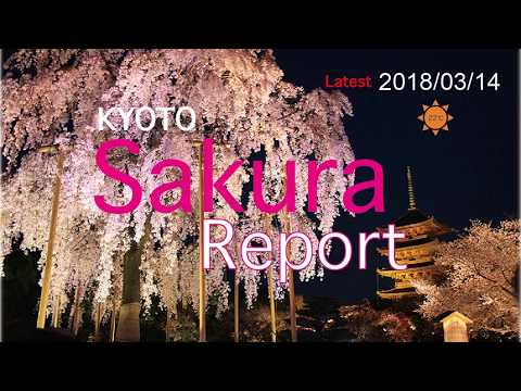 Latest Sakura report Kyoto 2018/03/14
