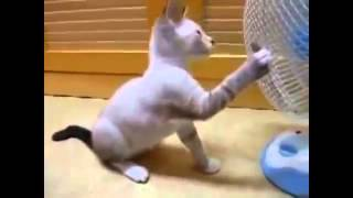 Кошки 3. cool and funny cats