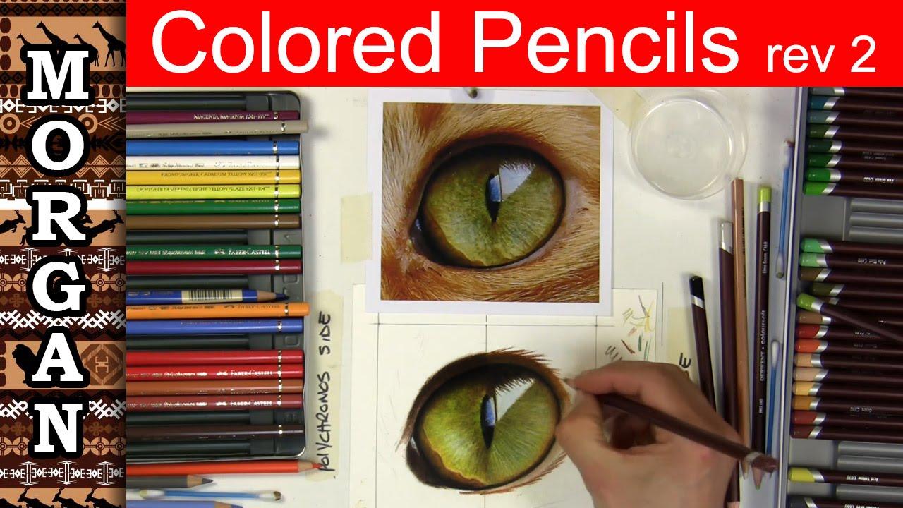 colored pencil drawing eyes jason morgan wildlife art how to