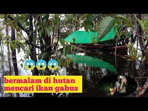 Bermalam Di Hutan Mencari Ikan Gabus, Teknik Rawai Atau Tajur 600 Mata Pancing   Kalimantan Tengah