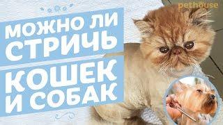 Можно ли стричь собак и кошек
