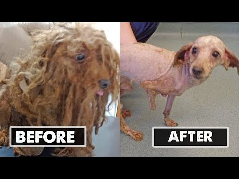 When Vets Shaved This Animal's Tangled Fur, They Learned The Sad Story His Hair Had Been Hiding