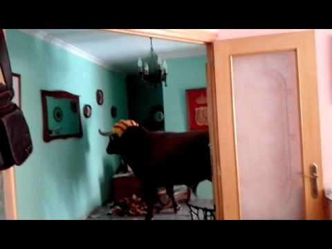 un toro entra a una casa y desata panico