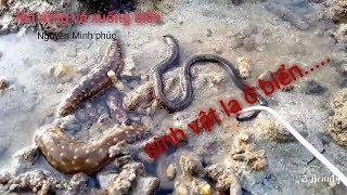 Bắt ốc ở rạn san hô và những sinh vật biển lạ....