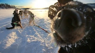 12 Happy Dogs Playing In The Snow