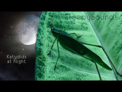 Katydids at Night – 9 Hour Sleep Sound – Katydids and Crickets