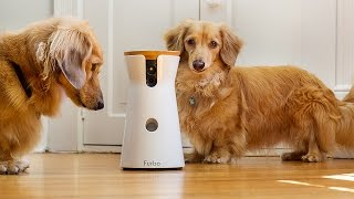 Furbo lets you toss your dog treats from afar