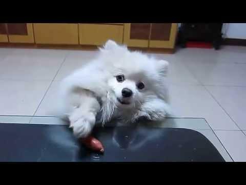 Dog Wants Sausage