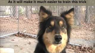 How To Train Your Dog To Fetch His Leash