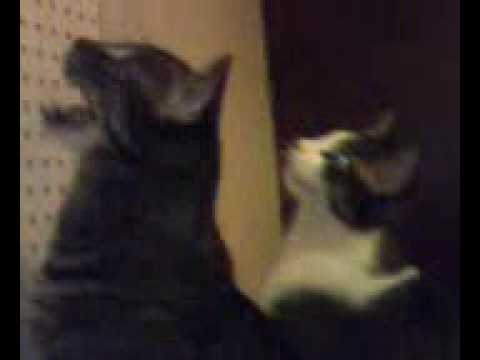 Cats...gatos orando a Dios...kittys talking with God... Videos De Viajes
